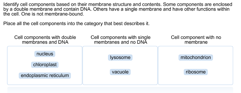 cell components