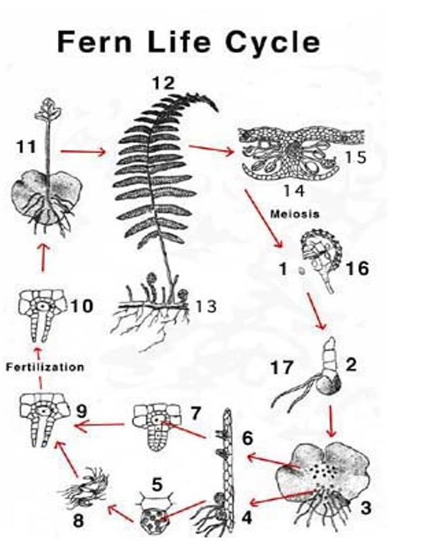 Fern Diagram To Label House Wiring Diagram Symbols
