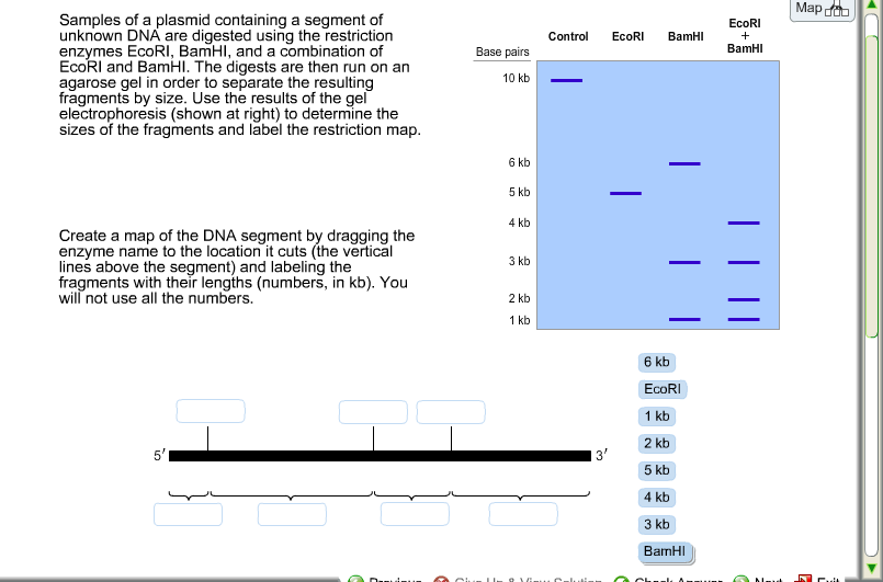 Solved Samples Of A Plasmid Containing A Segment Of Unkno
