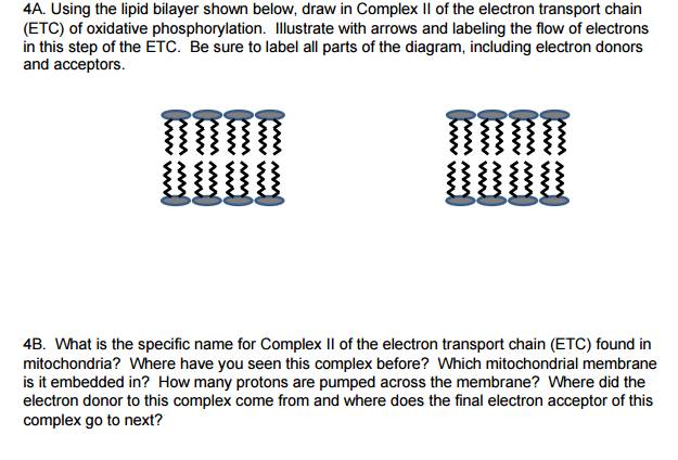 Solved A Using The Lipid Bilayer Shown Below Draw In Co