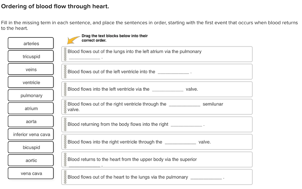 Solved Ordering Of Blood Flow Through Heart Fill In The