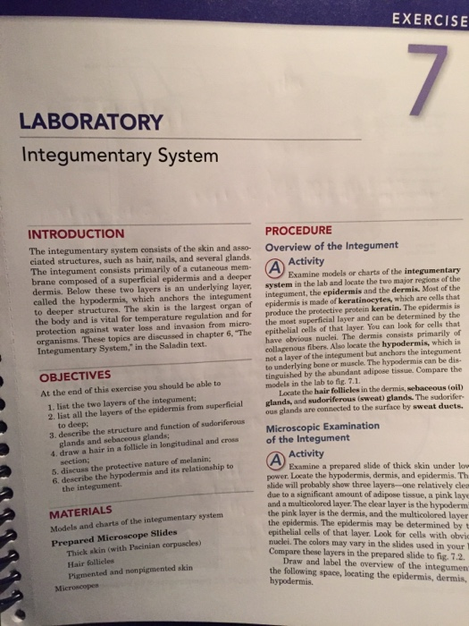Solved Exercise Laboratory Integumentary System Procedure