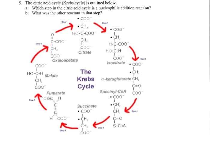5 Step Krebs Cycle Diagram Illustration Of Wiring Diagram