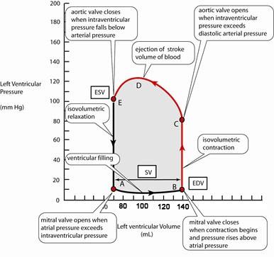 solved: refer to the pressure-volume loop of the cardiac c ... pv loop diagram pv wiring diagram