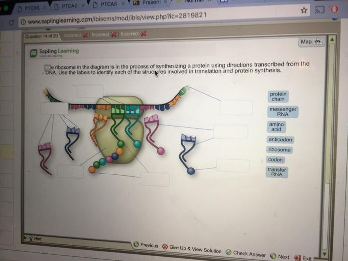 media%2F846%2F846ea3f1 69db 43cb af5f da7794d3dd77%2Fimage solved o www saplinglearning com ibiscms mod ibis view ph