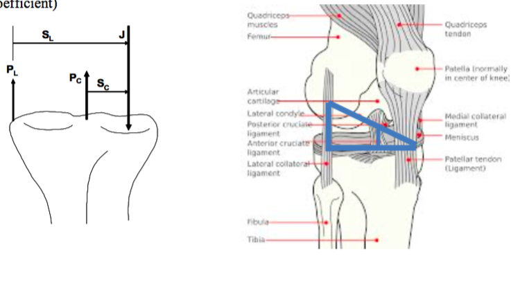 Solved: If A Lateral-to-medial Load Is Applied To The Foot ...