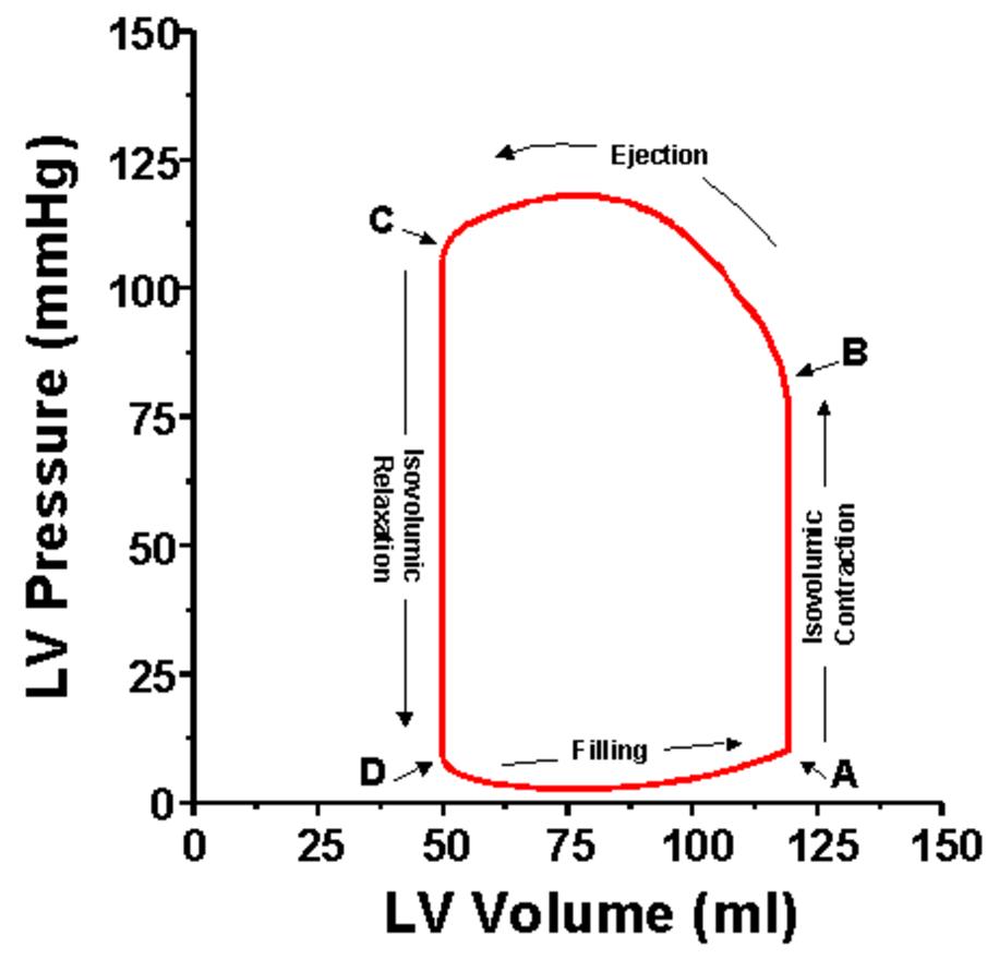 pv loop diagram
