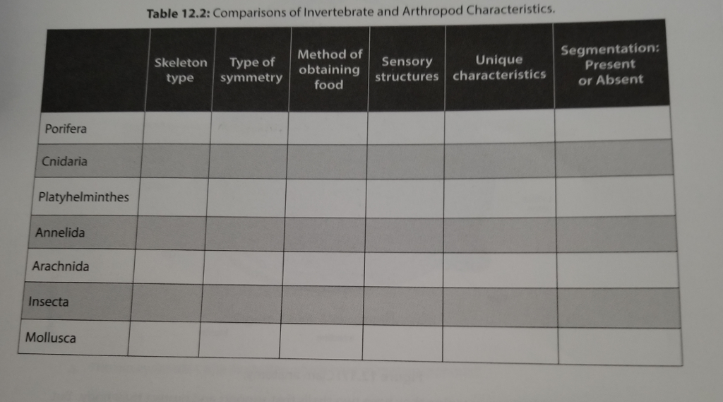 porifera characteristics