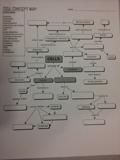 Solved: CELL CONCEPT MAP In The Form Of Which Makes CELLS ...
