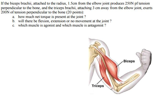 Solved: If The Biceps Brachii, Attached To The Radius, 1.5 ...