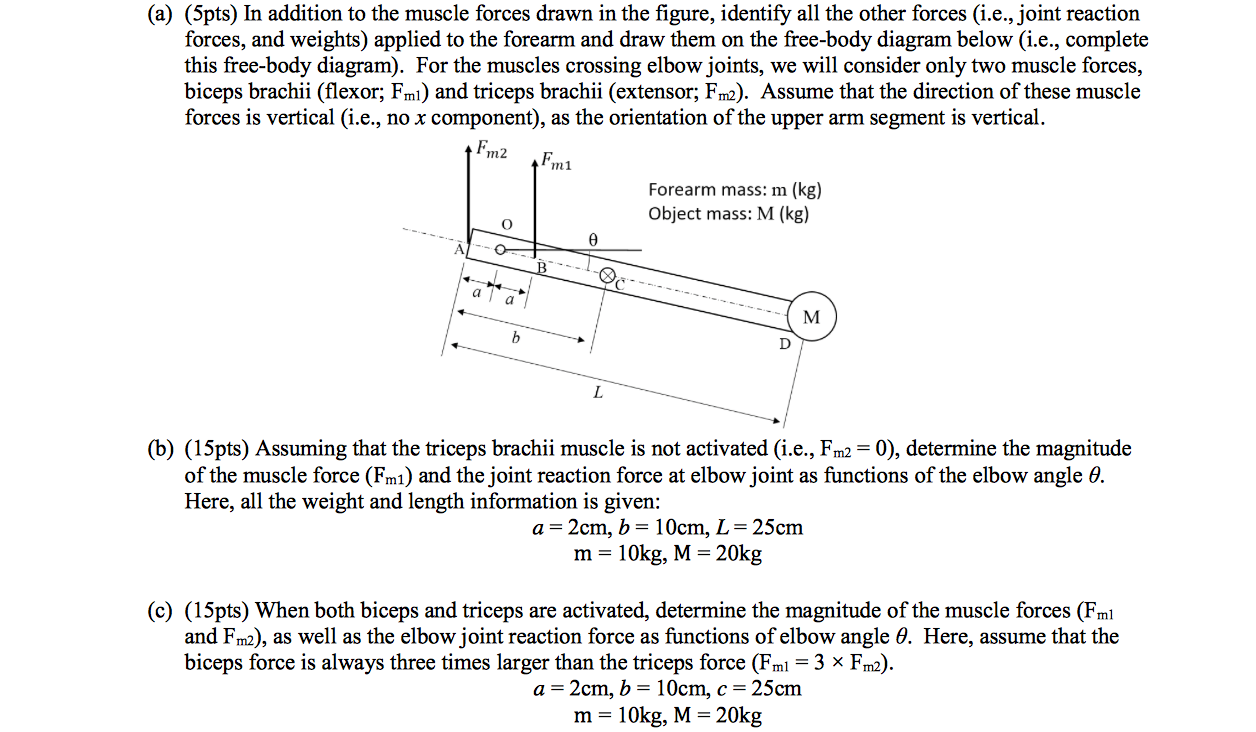 Solved In Addition To The Muscle Forces Drawn Figu Of