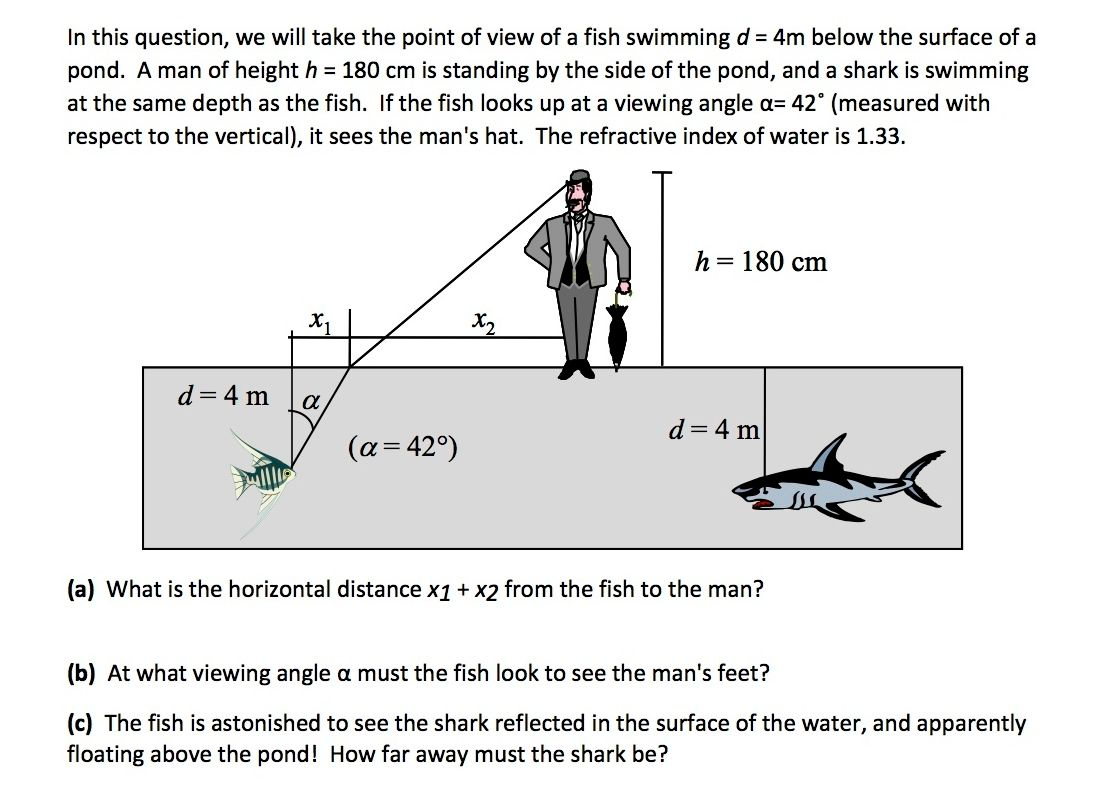 Solved in this question we will take the point of view o question in this question we will take the point of view of a fish swimming d 4m below the surface of a pooptronica