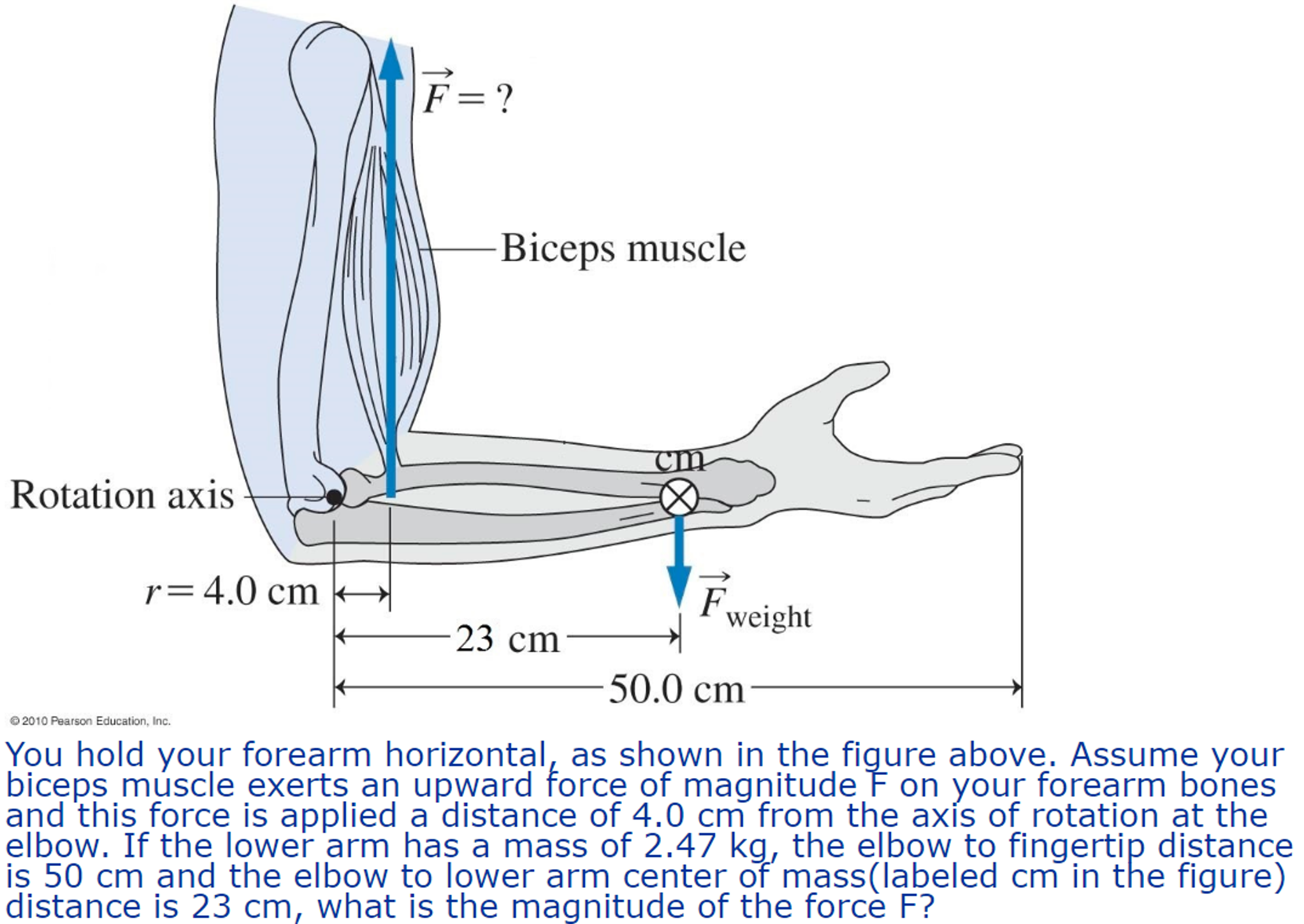 Solved You Hold Your Forearm Horizontal As Shown In The