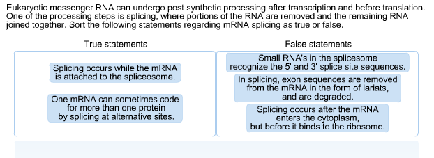 Before messenger rna is mature