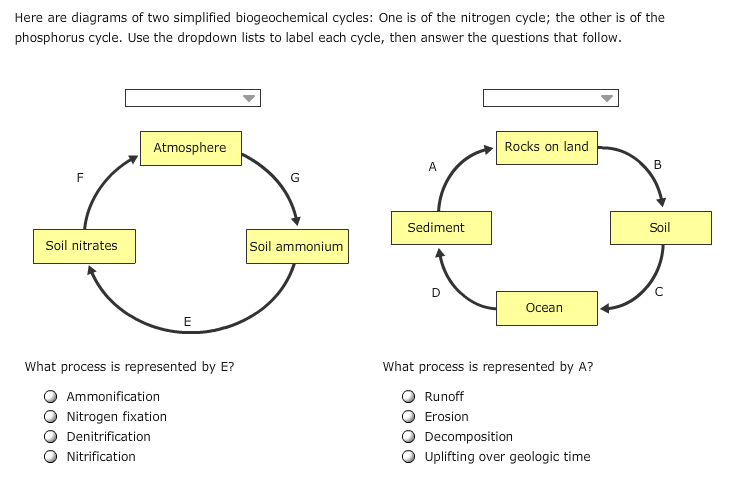 here are diagrams of two simplified biogeochemical cycles: one is of the nitrogen  cycle