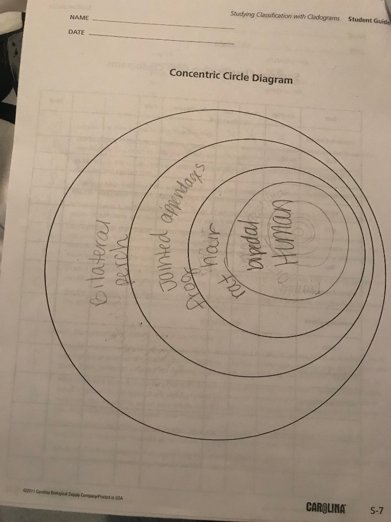 Solved studying classification with cladograms student gu question studying classification with cladograms student guid name date concentric circle diagram 2011 car ccuart Images