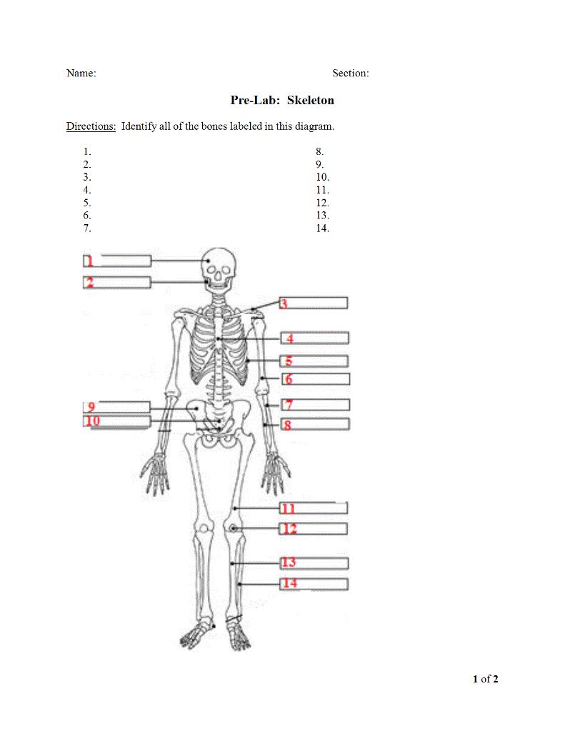 lab skeleton diagram - wiring diagrams