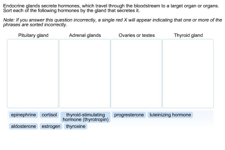 Solved Endocrine Glands Secrete Hormones Which Travel Th