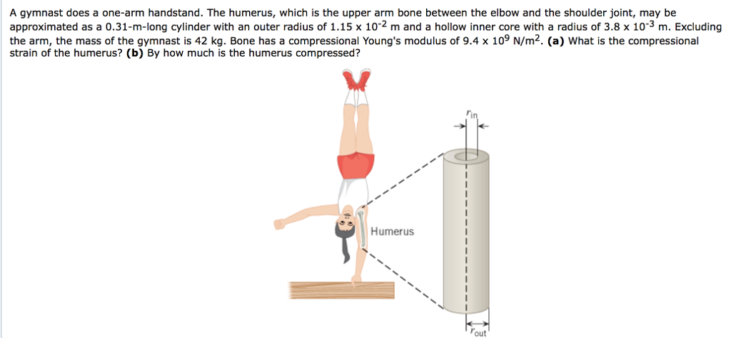 Solved A Gymnast Does A One Arm Handstand The Humerus W