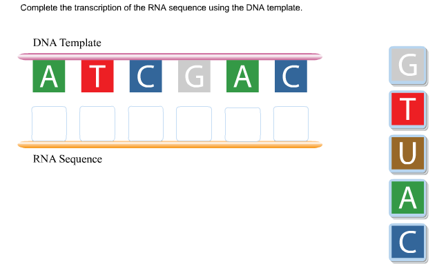 Solved: Complete The Transcription Of The RNA Sequence Usi ...