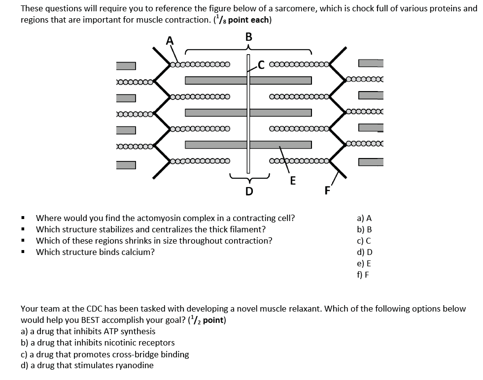 Muscle Contraction Worksheet : Sarcomere And Muscle ...