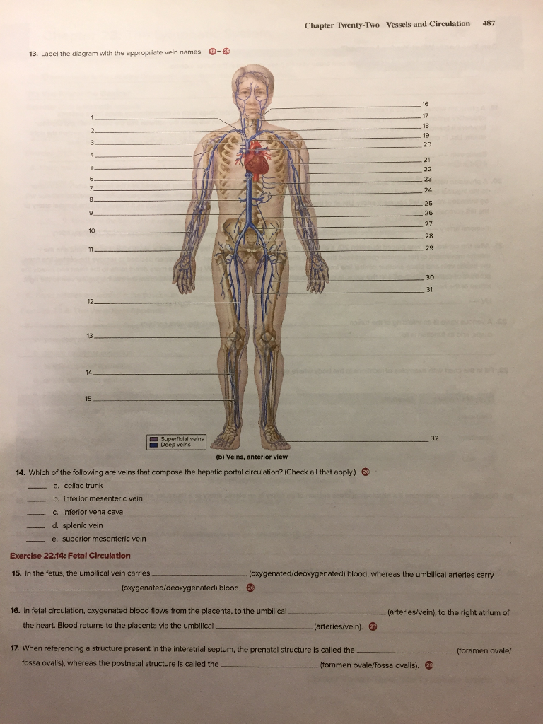 Anatomy And Physiology Archive | April 11, 2018 | Chegg.com