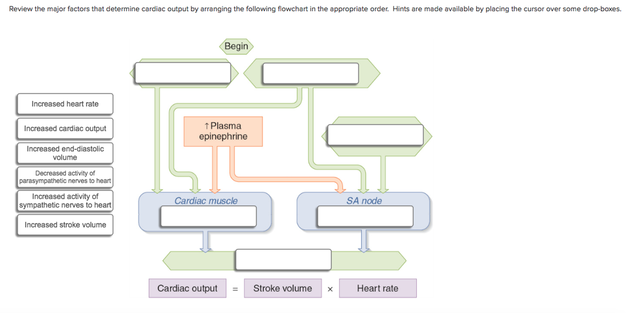 Solved Review The Major Factors That Determine Cardiac Ou
