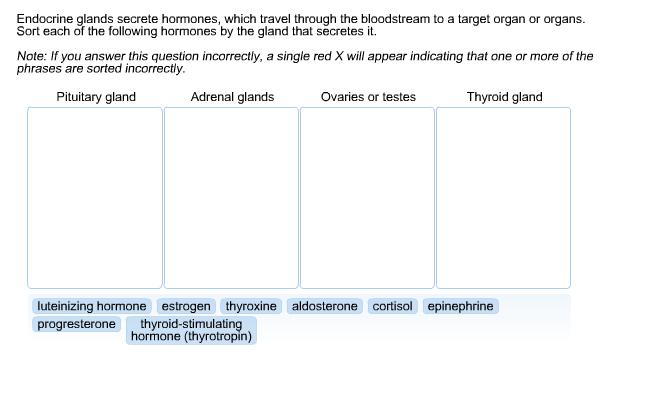 Solved: Endocrine Glands Secrete Hormones, Which Travel Th ...