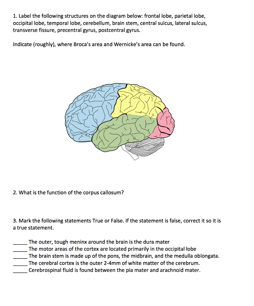 Solved 1 label the following structures on the diagram b label the following structures on the diagram below frontal lobe parietal lobe ccuart Images