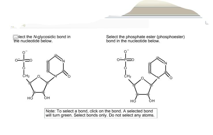 N Glycosidic Bond Solved: Select The N-g...
