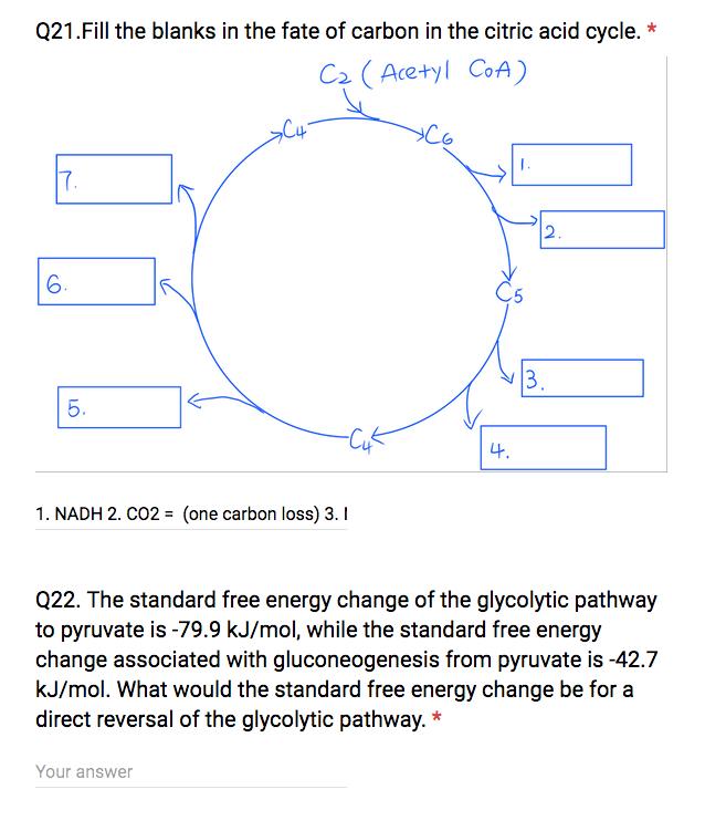 Krebs Cycle Worksheet Fill In Blank Krebs Cycle Worksheet Fill In
