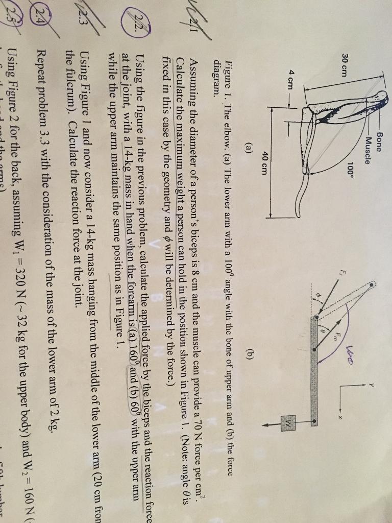 Solved Bone Muscle 100 30 Cm 4 Cm 40 Cm A B Figure 1