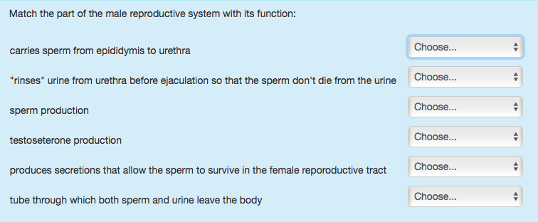 Solved Match The Part Of The Male Reproductive System Wit -7310