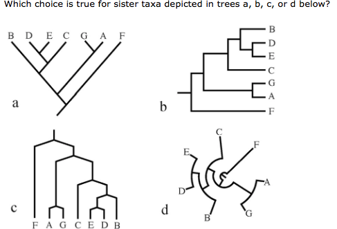 Solved which shows that b is not the sister taxa to d and question which shows that b is not the sister taxa to d and e in this tree which shows that b is a sister ccuart Gallery