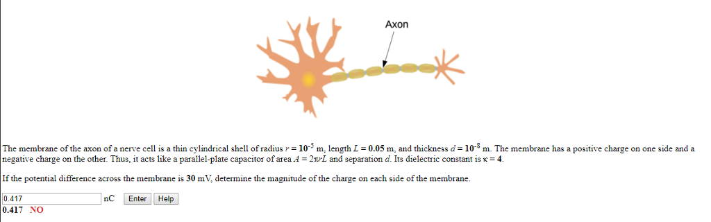 Solved axon the membrane of the axon of a nerve cell is a axon the membrane of the axon of a nerve cell is a thin cylindrical shell of ccuart Images