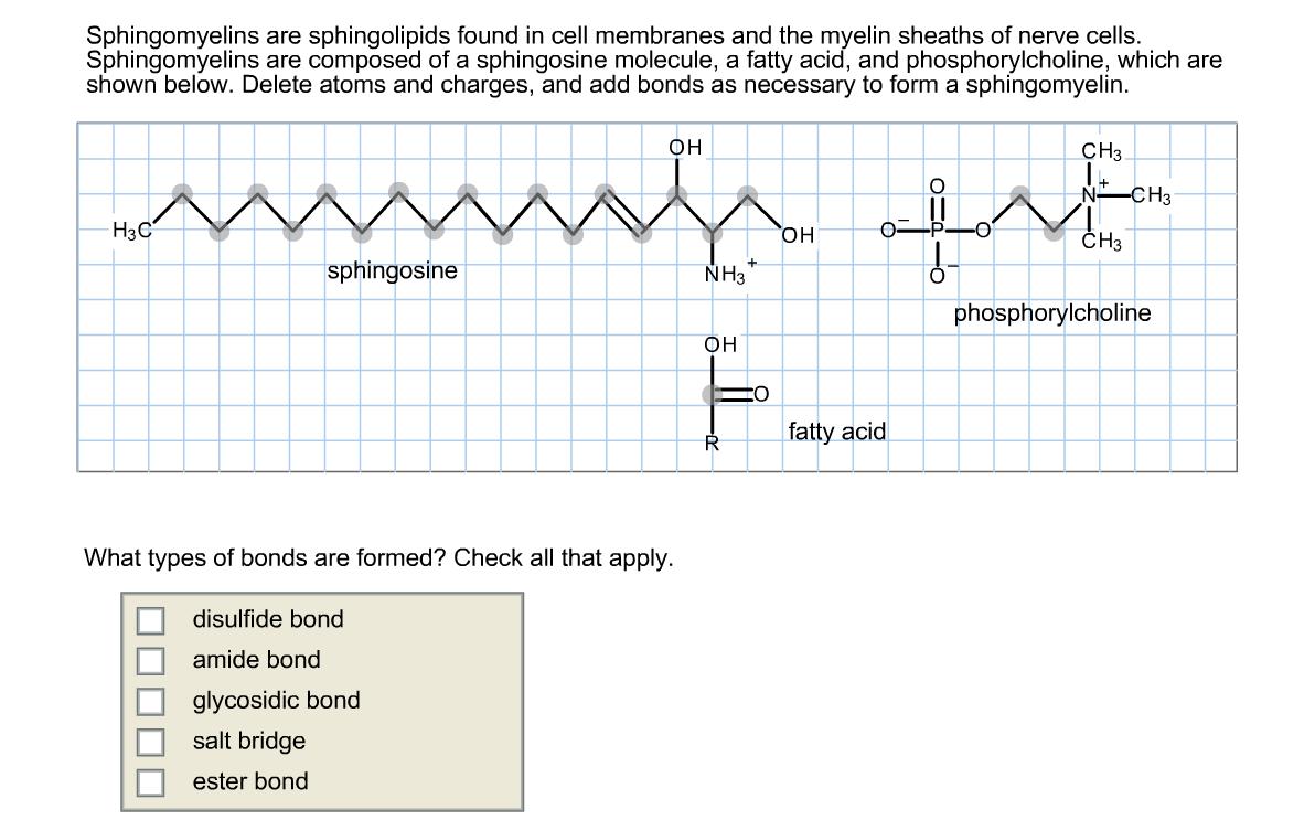 Solved Sphingomyelins Are Sphingolipids Found In Cell Mem