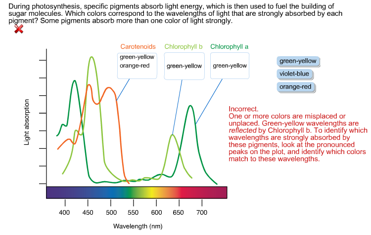 during photosythesis Plants (and some bacteria) release oxygen during photosynthesis, the process they use to change water and carbon dioxide into sugar they can use for food.