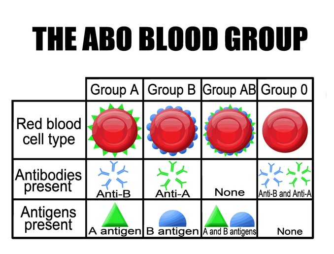 Solved: Background INFO There Are Four Types Of Blood: A, ... | Chegg.com
