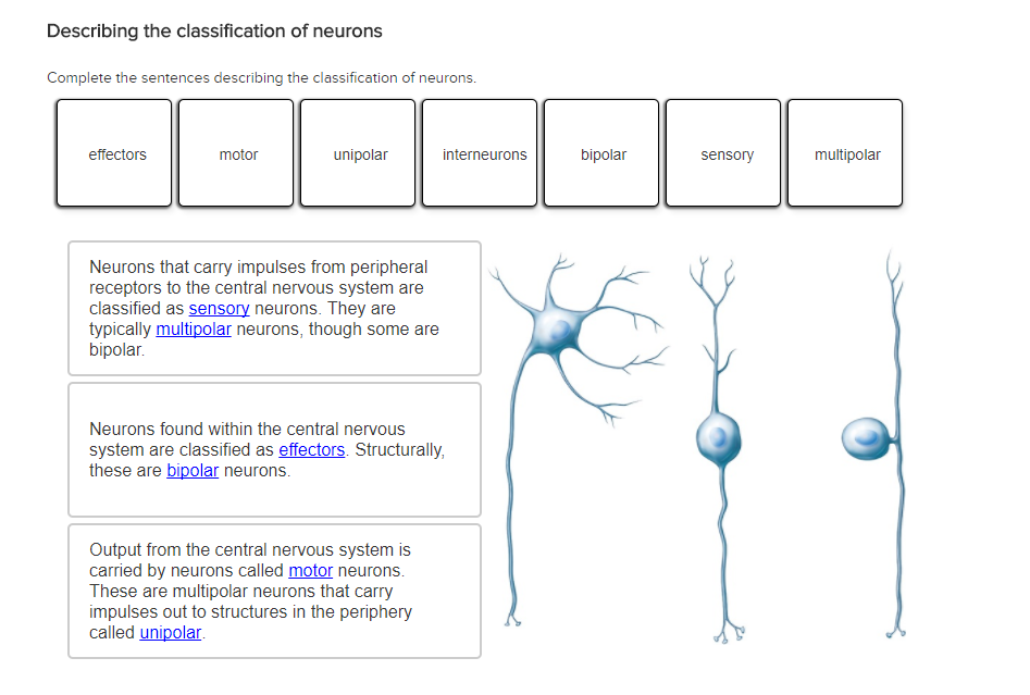 Solved: Describing The Classification Of Neurons Complete ...