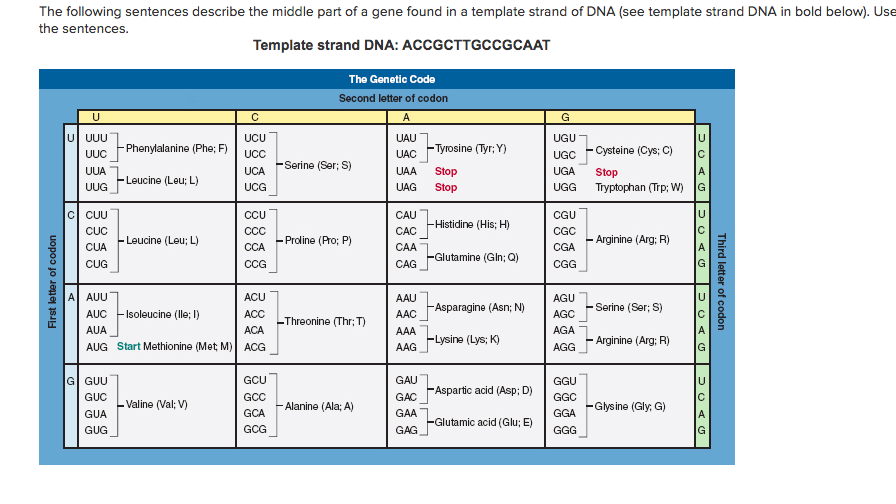 Template Strand Of Dna | Solved The Following Sentences Describe The Middle Part O