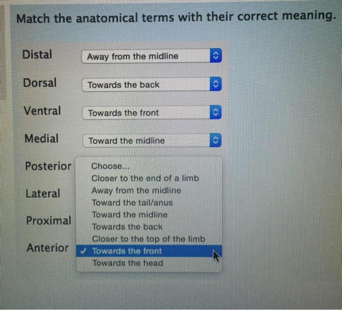 Solved Match The Anatomical Terms With Their Correct Mean