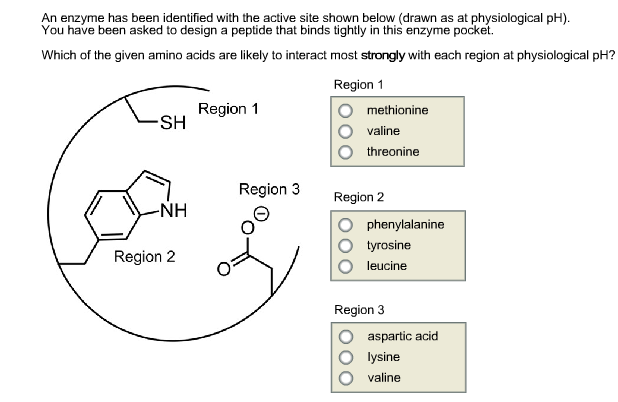 An enzyme has been identified with the active site shown below (drawn as at physiological pH) You have been asked to design a peptide that binds tightly in this enzyme pocket. Which of the given amino acids are likely to interact most strongly with each region at physiological pH? Region 1 Region 1 methionine SH Ovaline threonine Region 3 Region 2 NH anine O tyrosine O leucine Region 2 Region 3 O aspartic acid O lysine valine