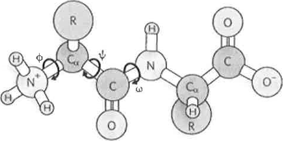 Solved: 7  Which Of The Following Represent Amino Acids Ar