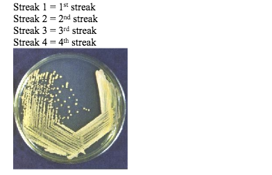 Solved: MICROBIOLOGY ONLINECULTIVATION OF BACTERIA - STUDY
