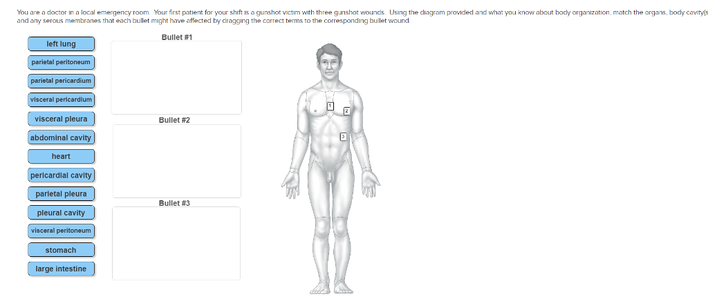 Body diagram for wounds auto electrical wiring diagram solved you are a doctor in a local emergency room you fi rh chegg com wound assessment body diagram wound assessment body diagram ccuart Choice Image