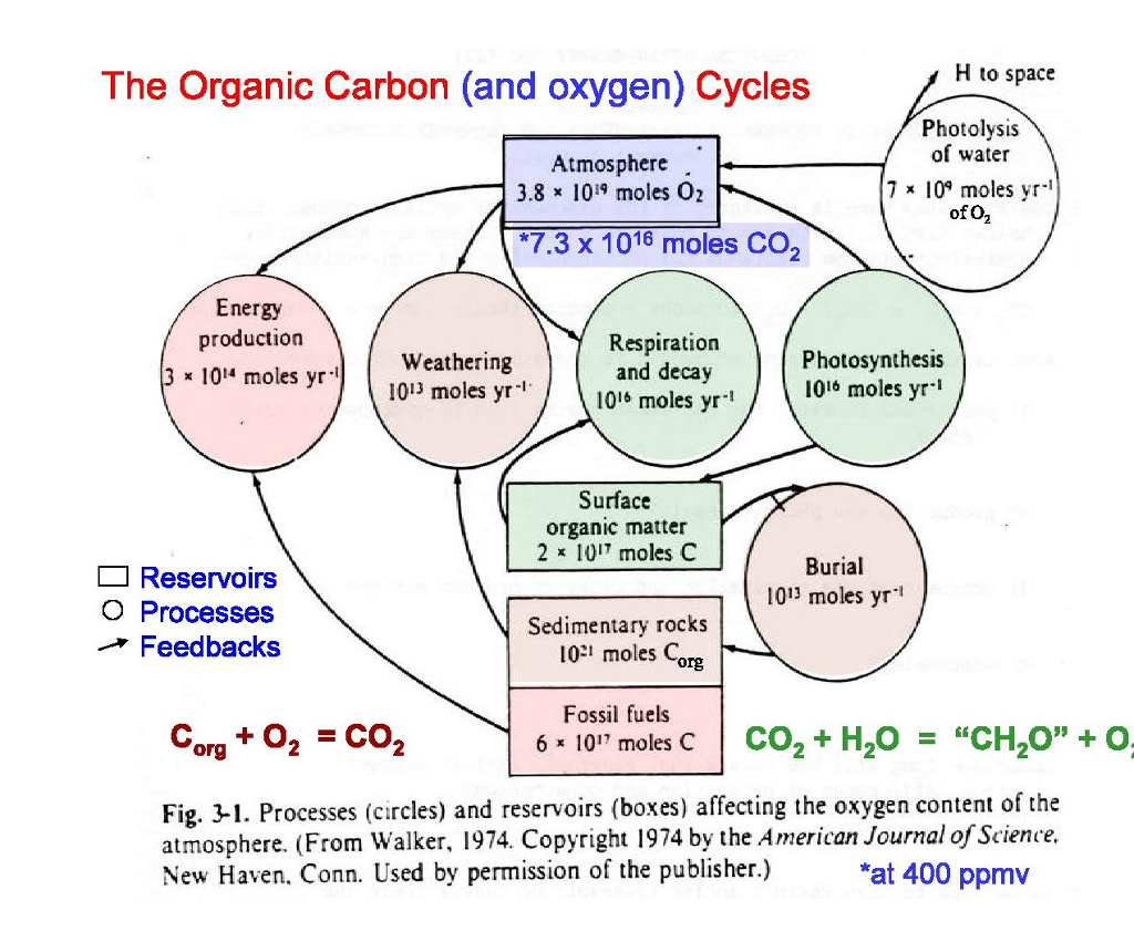 solved on the following page is a diagram (box model) of oxygen orbital box diagram at Oxygen Box Diagram