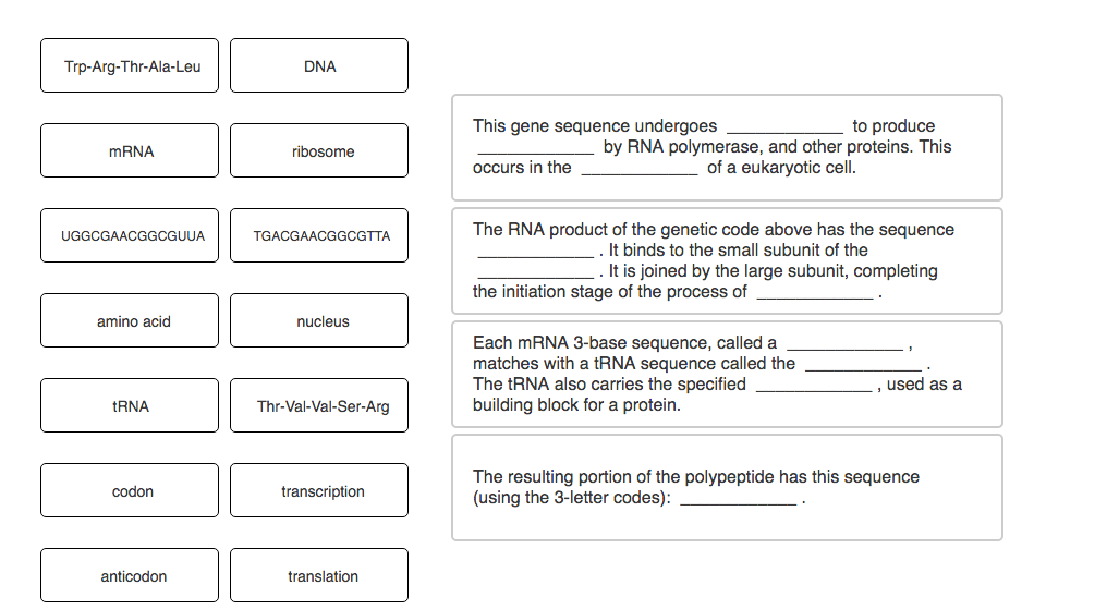 Solved the following sentences describe the middle part o show transcribed image text the following sentences describe the middle part of a gene found in a template strand of dna see template strand dna in bold maxwellsz