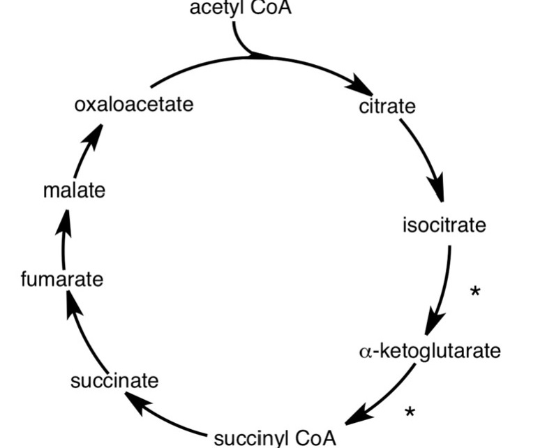 solved in the diagram of the citric acid cycle shown wha. Black Bedroom Furniture Sets. Home Design Ideas