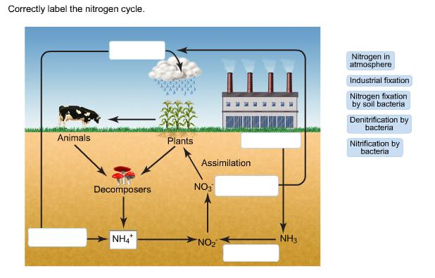 solved correctly label the nitrogen cycle nitrogen in at. Black Bedroom Furniture Sets. Home Design Ideas
