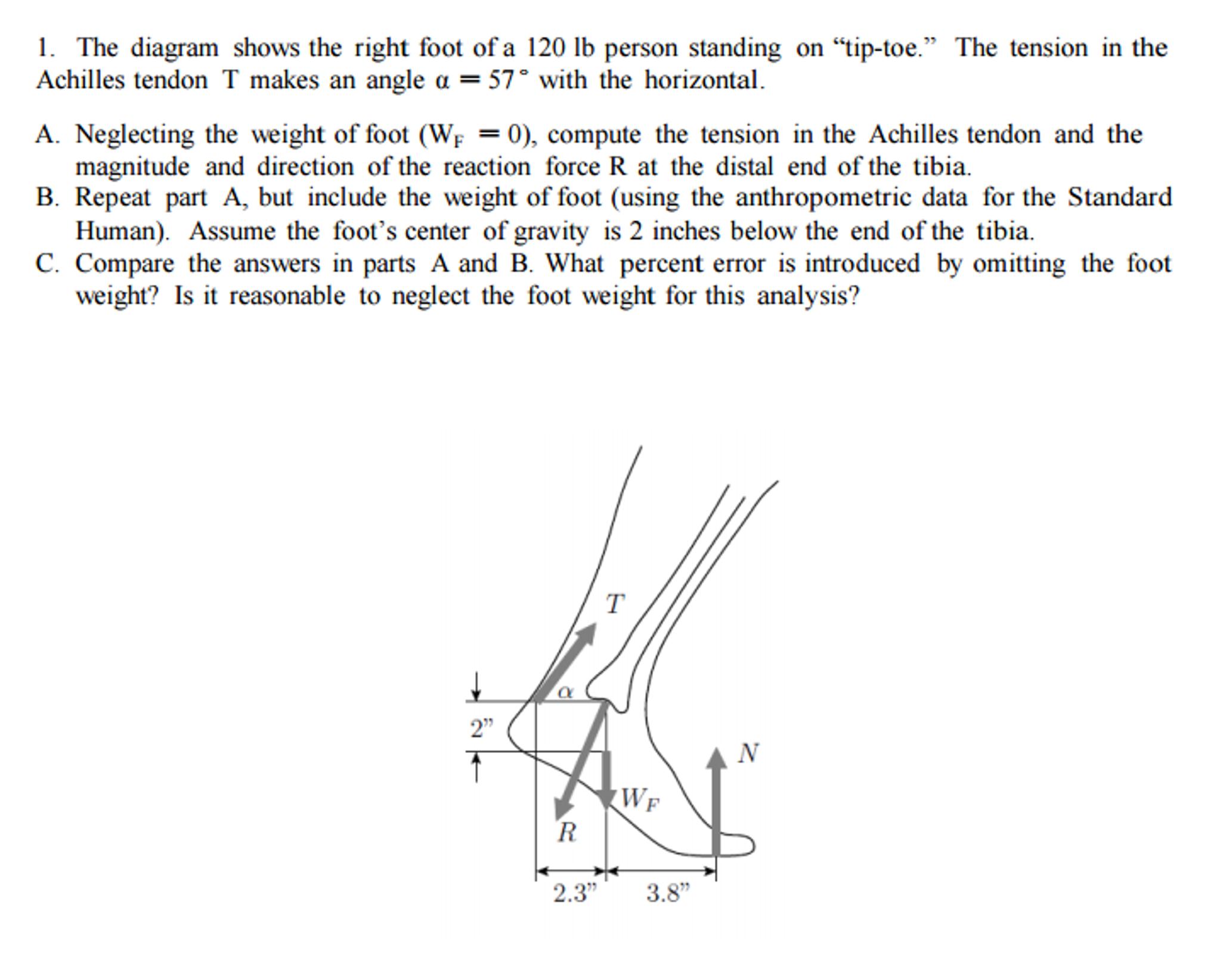 Great Right Toe Diagram - Online Schematic Diagram •